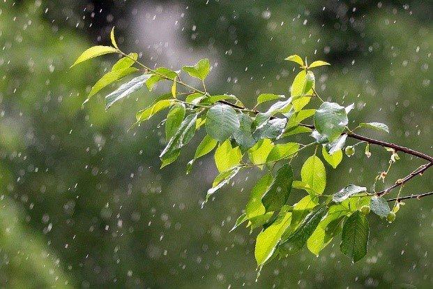 citricos condiciones climaticas precipitacion