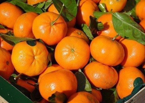 citricos condiciones climaticas subtropicos 2