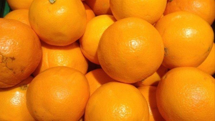 citricos condiciones climaticas tropicos 1