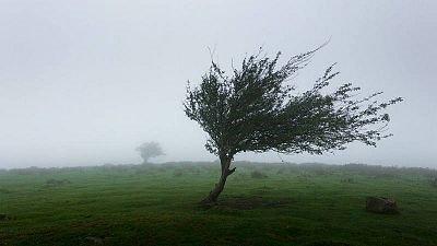 citricos condiciones climaticas viento