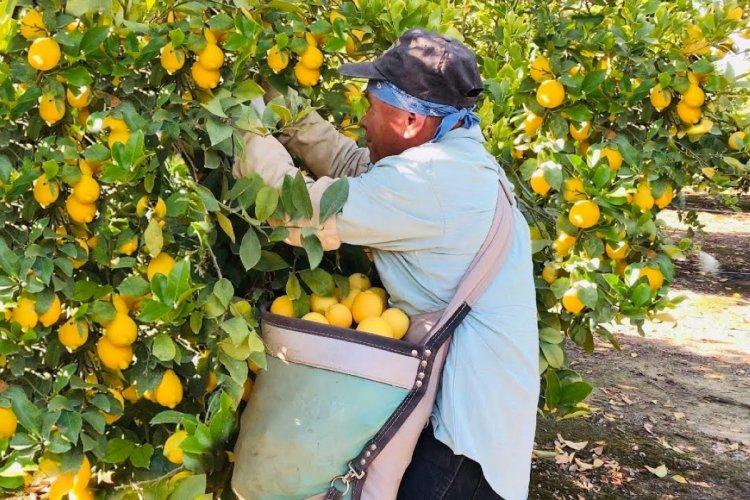 citricos escenario citricola mexico 5