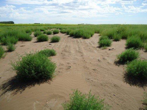 citricos suelos arenosos 1