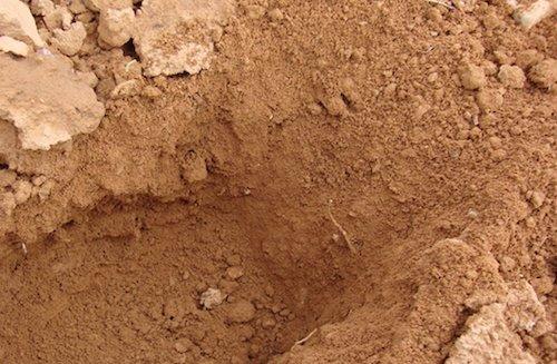 citricos suelos arenosos 2