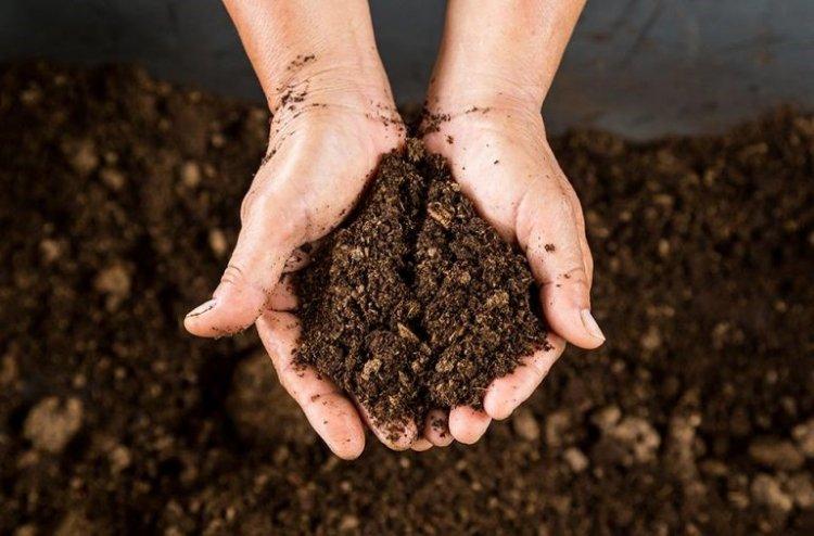 citricos suelos propiedades fisicas