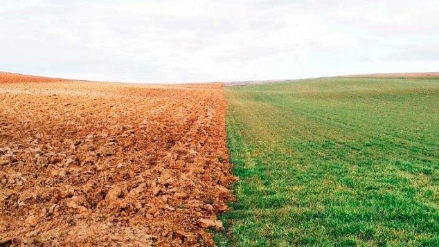 citricos suelos topografia 1